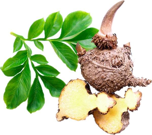 Glukomanan korenina prehranski dodatek za hujšanje