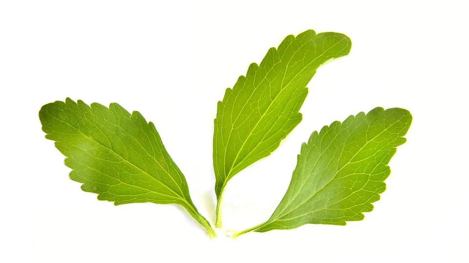 Stevia rastlina.