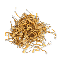 Kordiceps goba