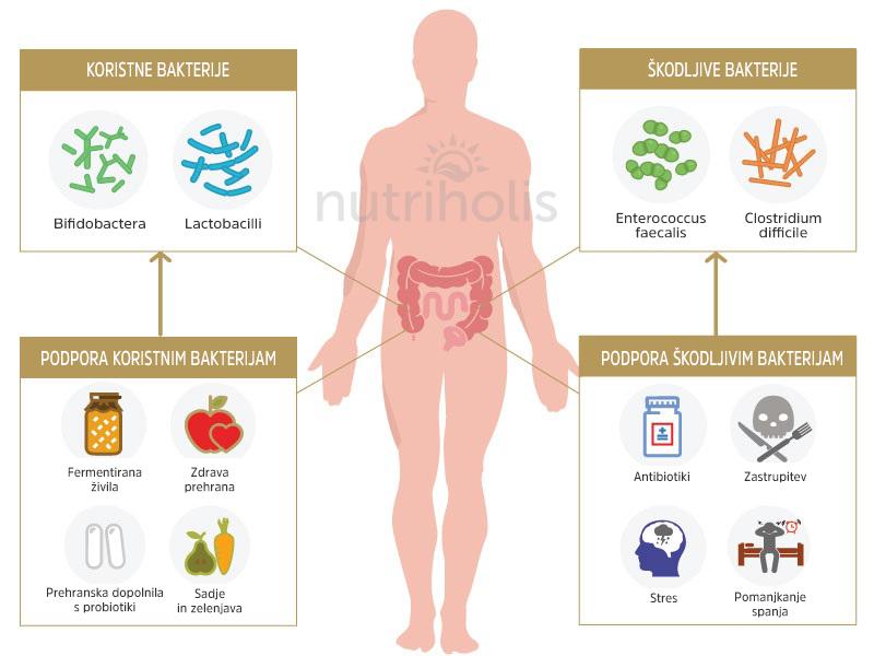 Diagram - koristne in škodljive bakterije