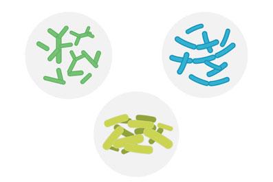 Jasno definiriani sevi dobrih bakterij