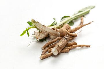 Cikorija - korenina