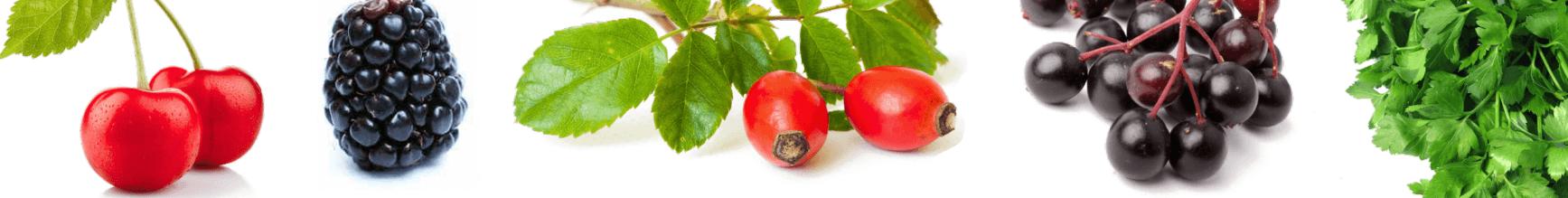 NutriHolis Natural C - naravni vitamin C - sestavine