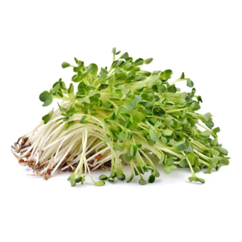 Alfalfa - NutriHolis Prebavni encimi