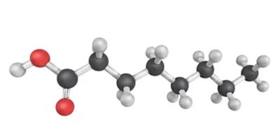 Kaprilna kislina - NutriHolis Candida Stop