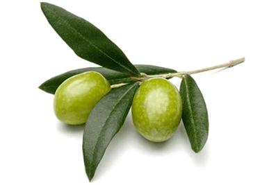 Oljčni listi - NutriHolis Saccharomyces Boulardii